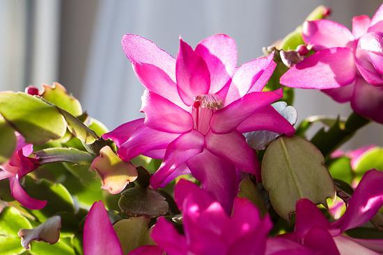 Нажмите на изображение для увеличения.  Название:Blume 015-1.jpg Просмотров:29 Размер:61.0 Кб ID:4702